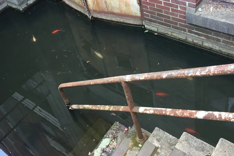 Fish swim in a flooded stairwell to the waterlogged basement of a building in the Philadelphia Navy Yard.