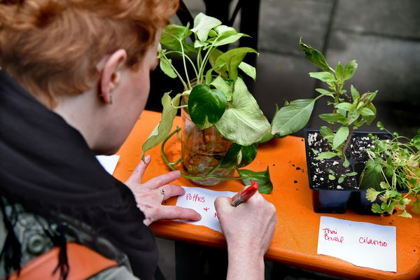 Plant swaps: How to get free plants and gardening gear (and make friends, too)