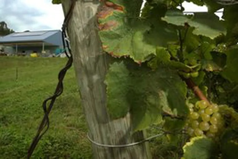 """Stargazer Vineyards near Coatesville will be a classroom during the """"wine camp"""" where participants will get a lesson in wine chemistry."""