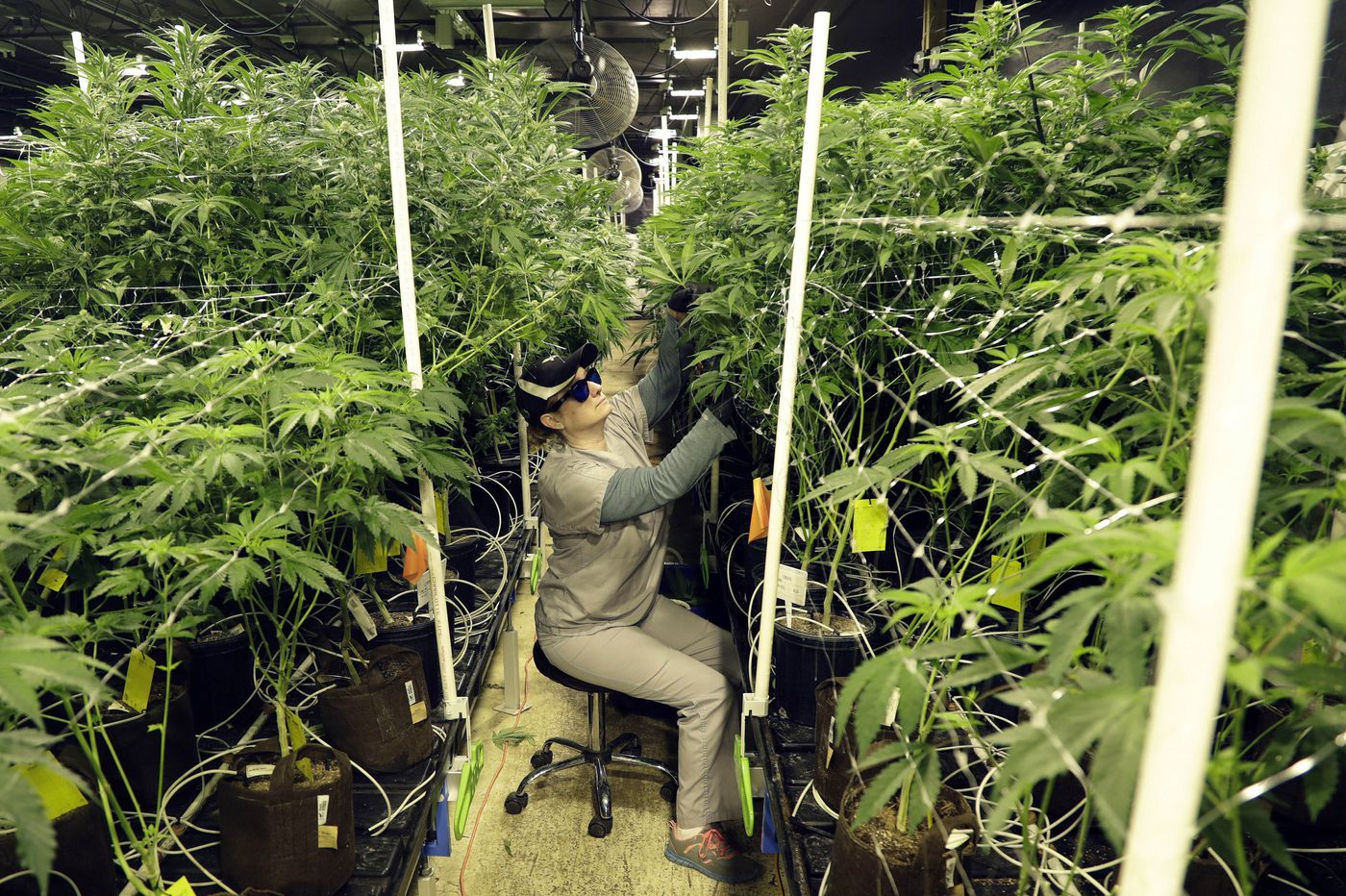 What happens if New Jersey legalizes marijuana? Everything you need to know.