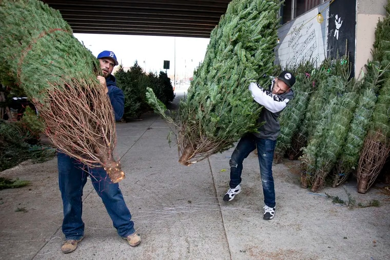 Rob Felker, 34, of South Philadelphia, slams a Christmas tree to unveil the size and branches for customers to see the tree they picked out in late November. Now that the holiday has passed, there are many creative ways to re-purpose and recycle the trees.