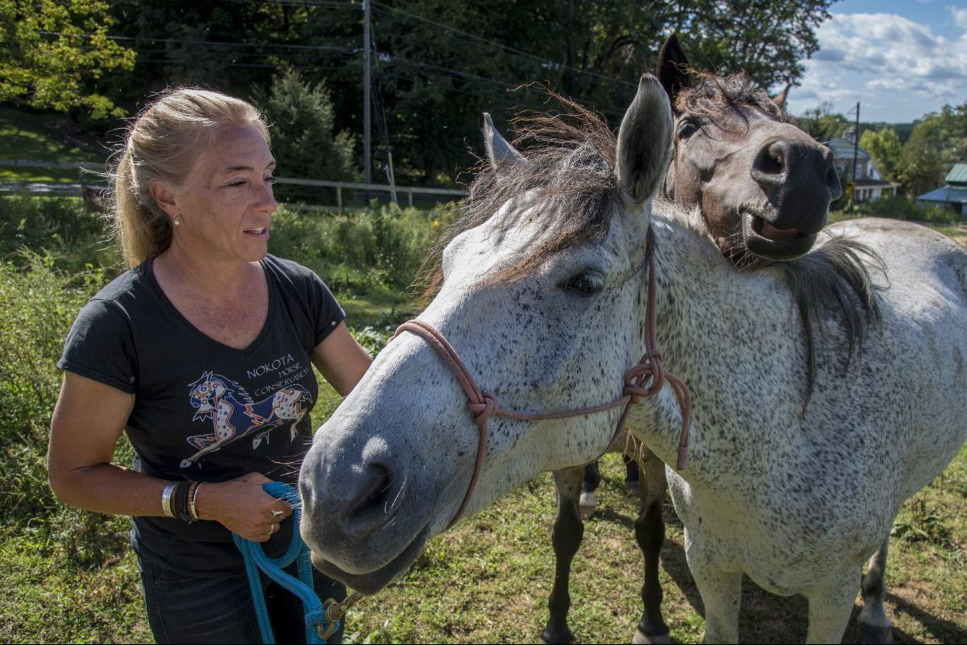 Chesco woman rescues endangered wild Nokota horses