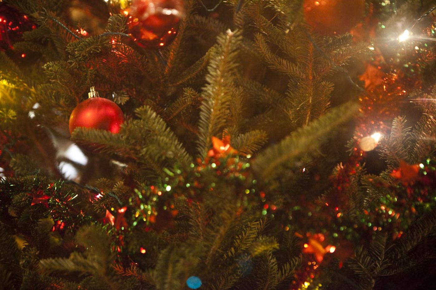 Growing Concerns: Christmas trees can give enjoyment right through spring