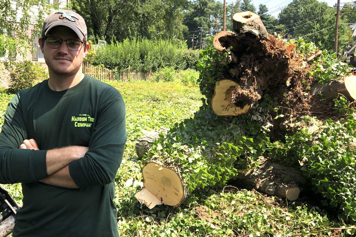 This has been a tough season so far for trees | Kevin Riordan