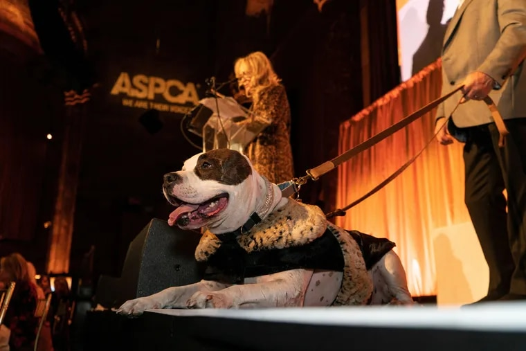 Sweet Pea receives the ASCPA Dog of the Year