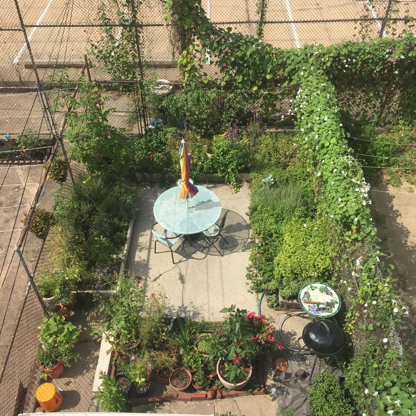 Why My South Philly Urban Garden Made Me Want To Get Up In