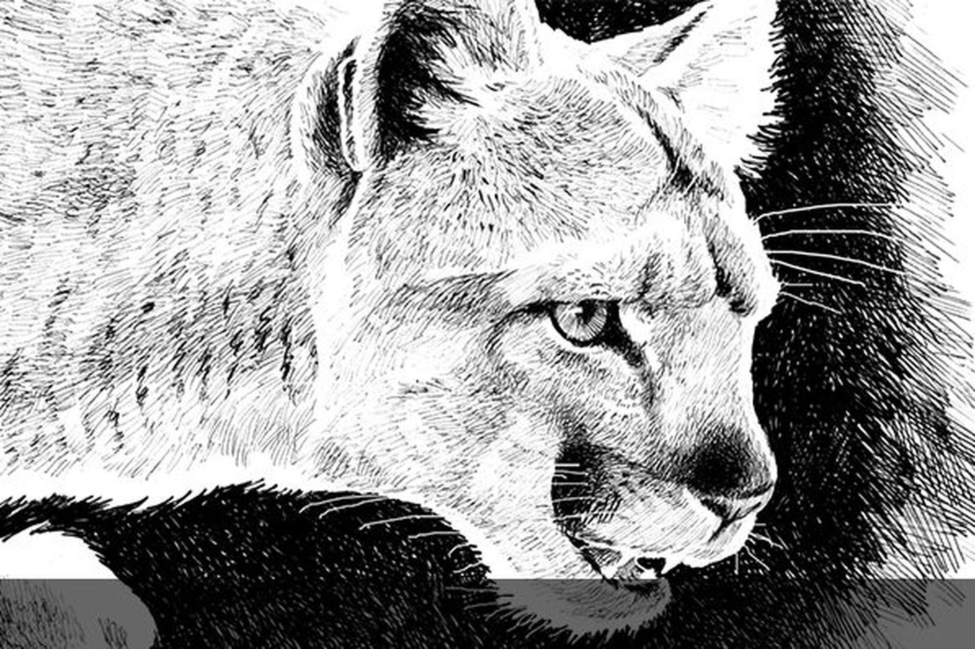 Eastern cougars are now officially extinct