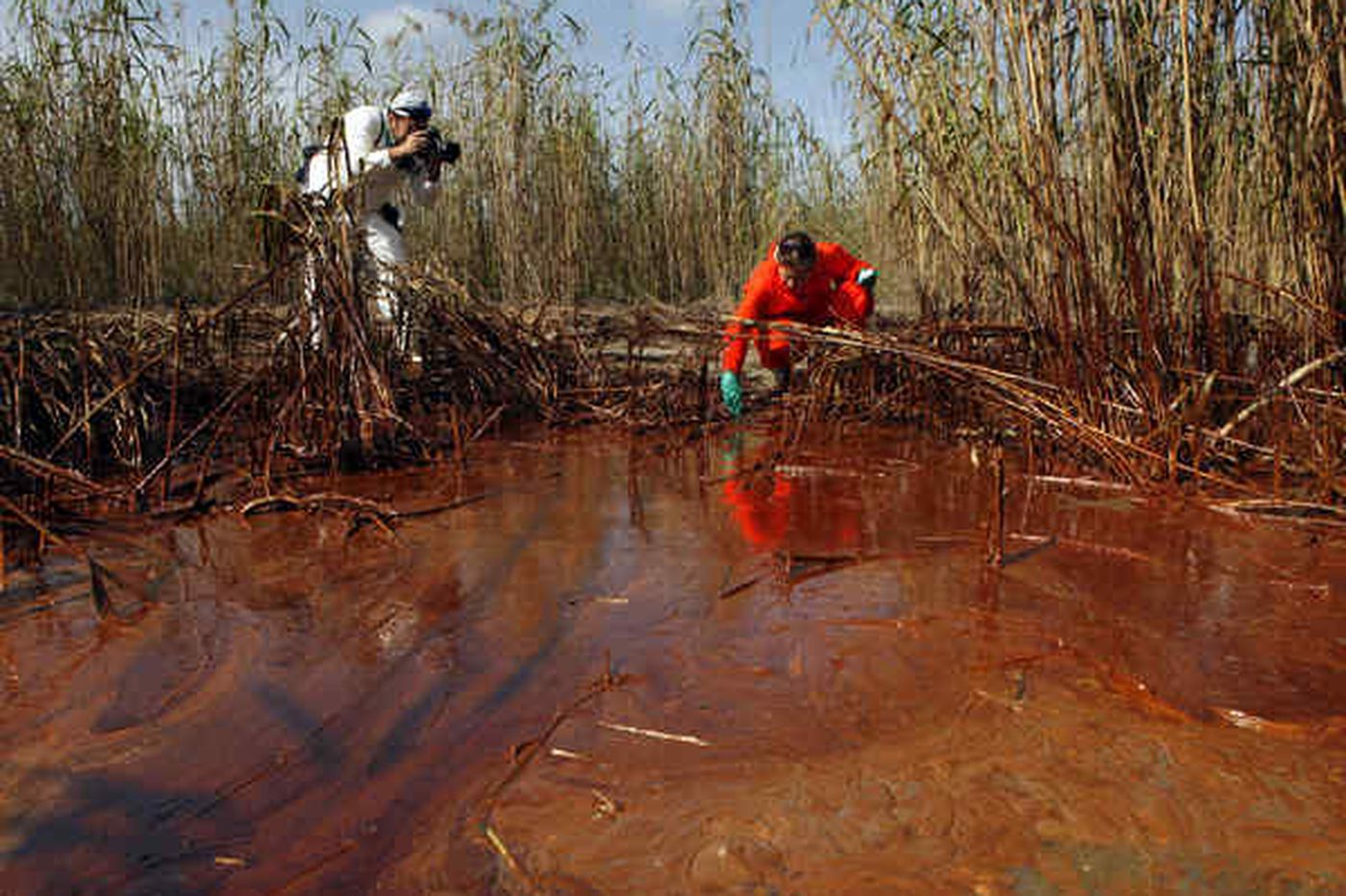 In gulf marshes, oil removal may be impossible