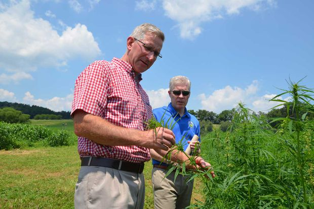 Former Flyers enforcer, cannabis advocates prepare for the Pa. hemp industry to rocket after Trump's approval of Farm Bill