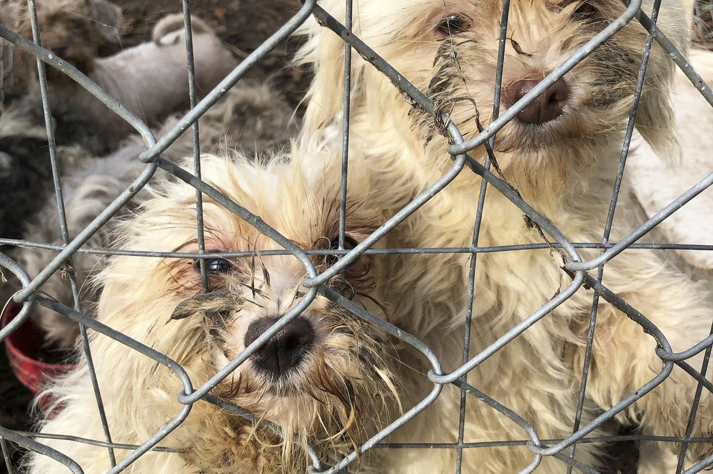 Burlco woman indicted on animal cruelty charges