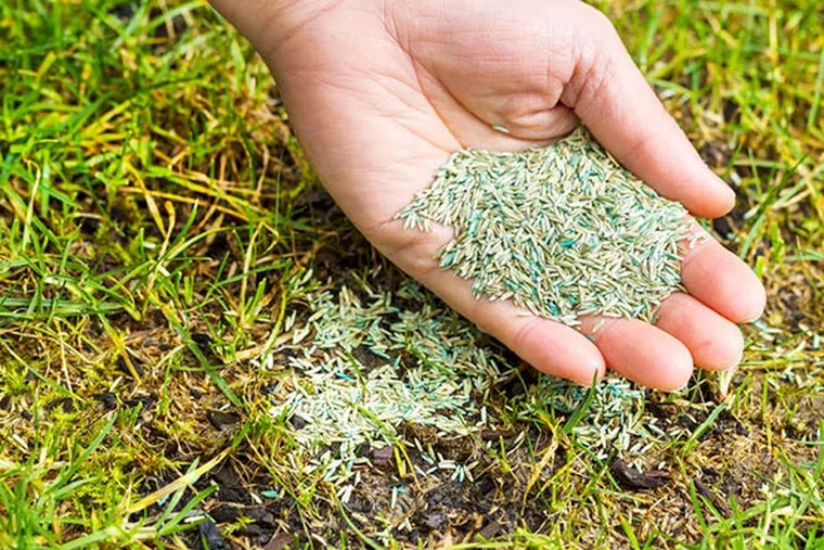 April is a good time to rejuvenate a sad-looking lawn. Choose seed according to your lawn's sun or shade conditions, and apply a high-nitrogen fertilizer. (istock photo)