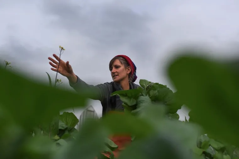 Liz Whitehurst picks greens at Owl's Nest Farm in Upper Marlboro, Maryland, on Nov. 9. Whitehurst is the owner and operator of the farm, which sells its produce at a D.C.-area farmers market, to restaurants and through CSA shares.