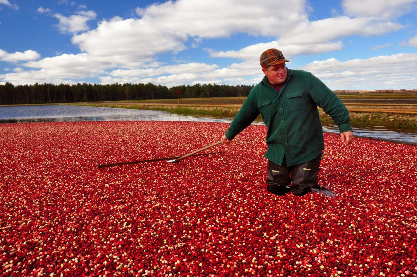 In Wisconsin, visitors can literally dip their toes into the cranberry harvest