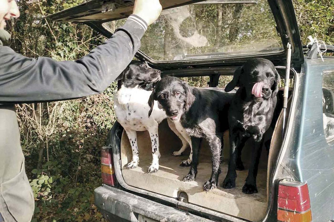 Personal Journey: Truffle hunting in Tuscany