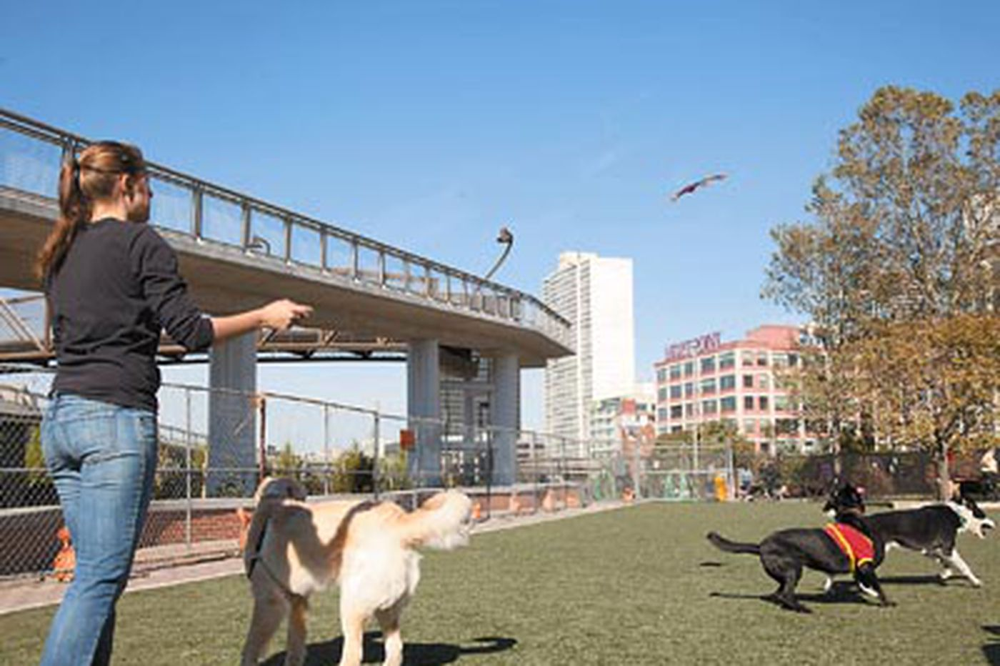 Canine oasis in the city