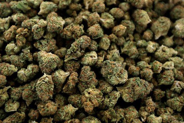 Six new marijuana growers get the nod for N.J.