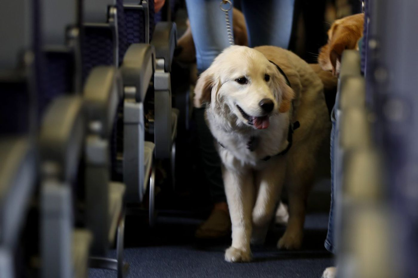 Fur and fury at 40,000 feet as more people bring animals on planes