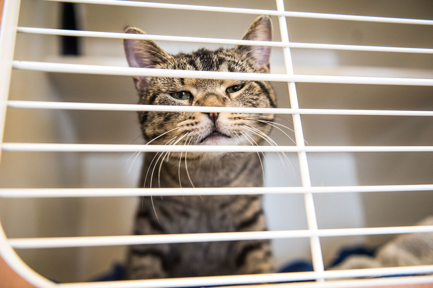 Adopting a cat? As kitten season nears, here's what to consider.