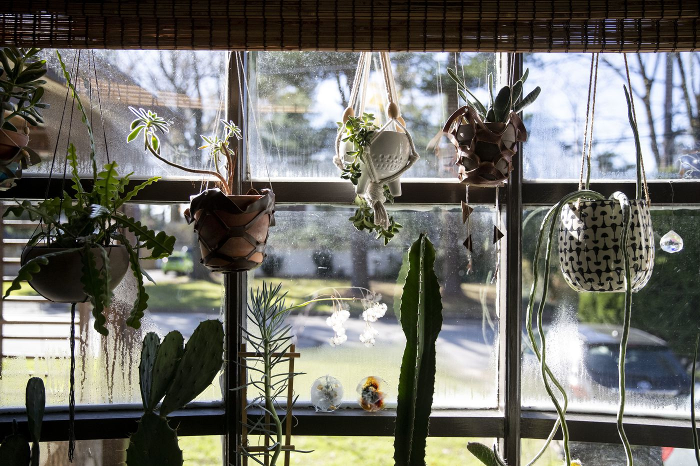 Plant lover's green thumb makes an imprint on her Montgomery County home