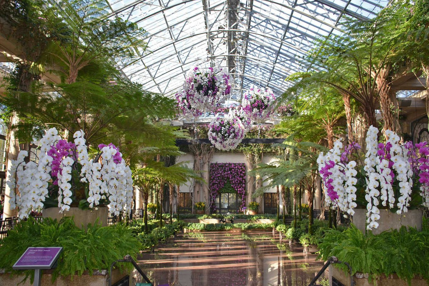 4,500 orchids, including one that takes over three years to grow, will be on display at Longwood Gardens' Orchid Extravaganza
