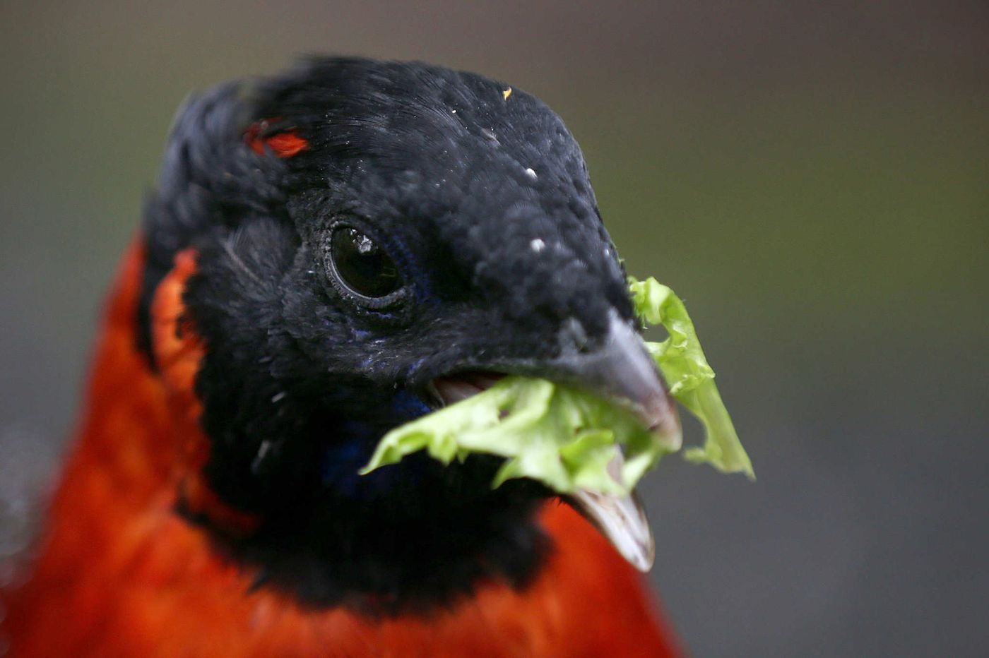 Camden County feeds the primates, the birds and more at Philly's zoo