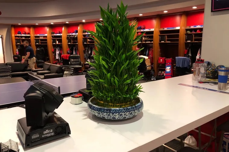 Brad Miller's lucky bamboo plant, which he purchased in Chinatown on Monday.