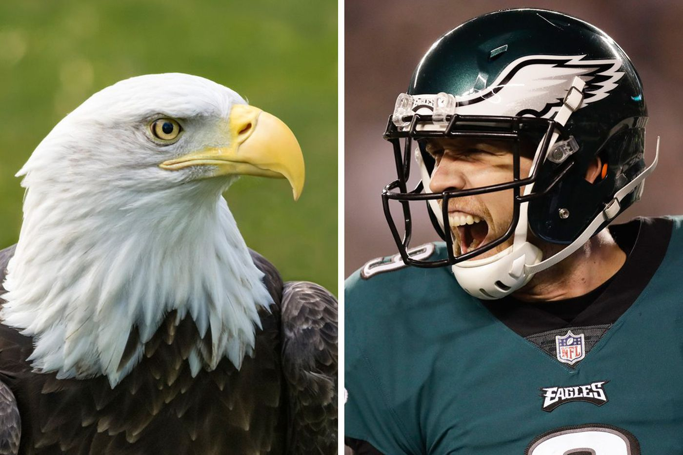The Philadelphia Eagles and their winged mascot have more in common than you might think