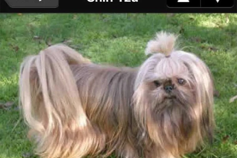 The Perfect Dog app will tell you all about the shih tzu and any other breeds that interest you.