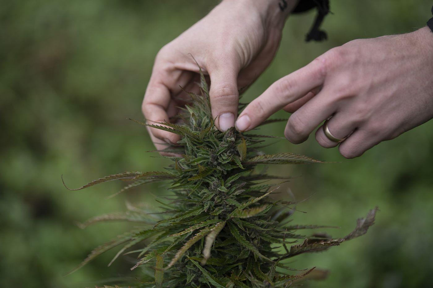 Upcoming cannabis ipo