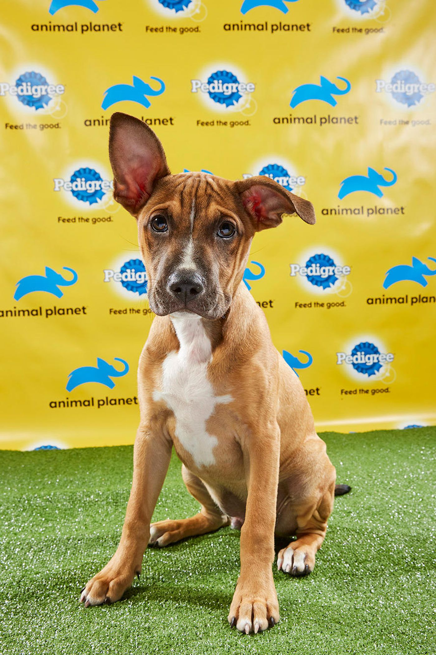 detailed look 2363f 91a2a Animal Planet's Puppy Bowl XV to feature dogs from three ...
