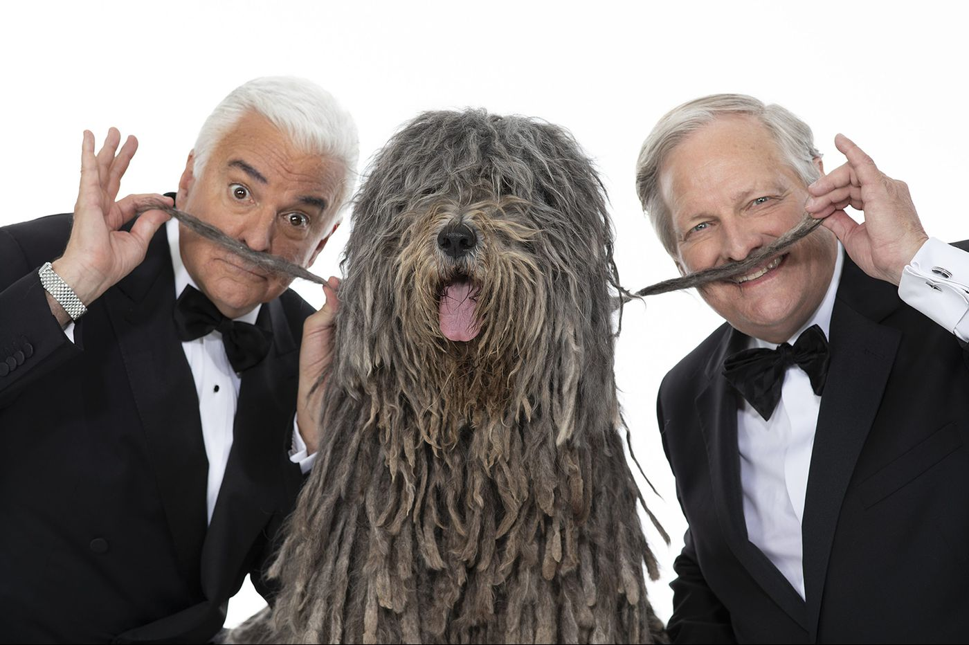 National Dog Show: Pictures of 10 of the 'weirdest' breeds you can see — and pet — this weekend
