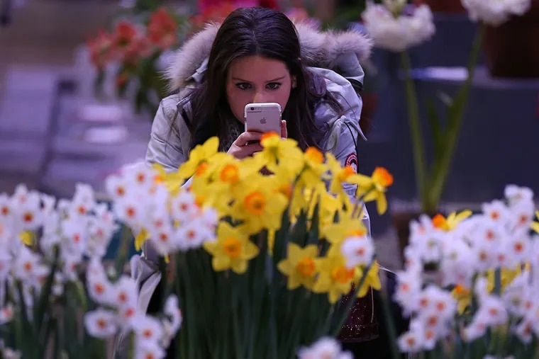 Carolyn Brown, of Philadelphia, takes a photo of daffodils during the PHS members day at the PHS Philadelphia Flower Show inside the Pa. Convention Center in 2016.