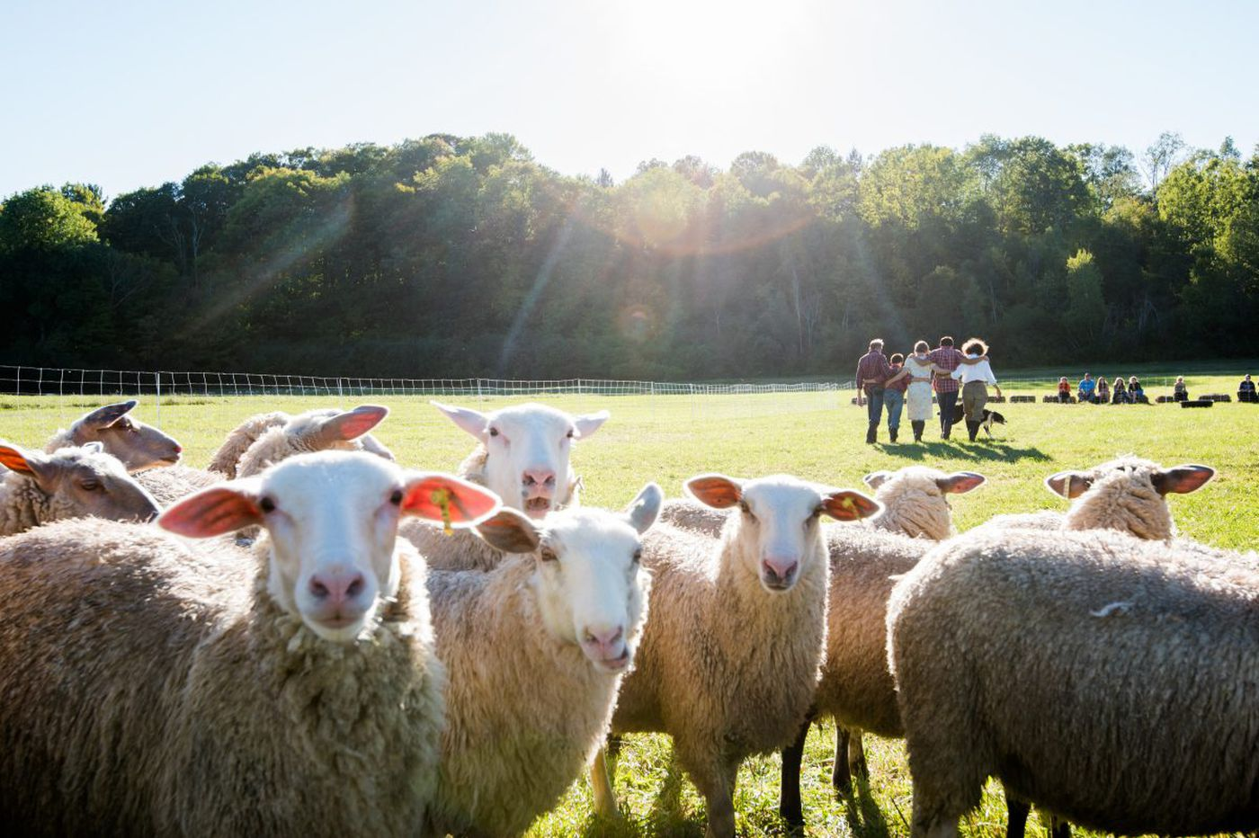 Kimmel Center's PIFA fest returns with human chandelier, global 'genius' artists, dancing sheep
