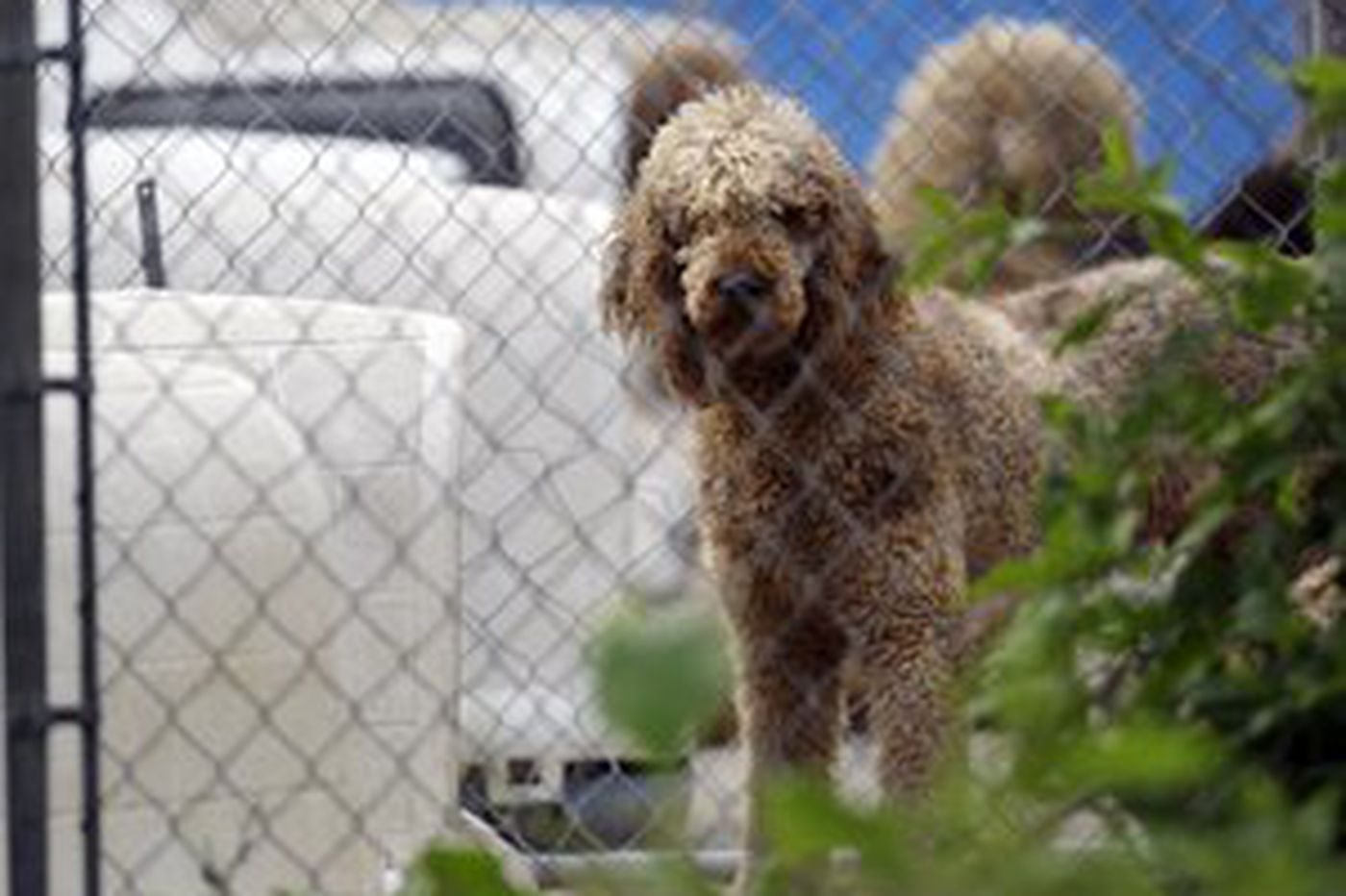 Lehigh County kennel owner charged, loses license