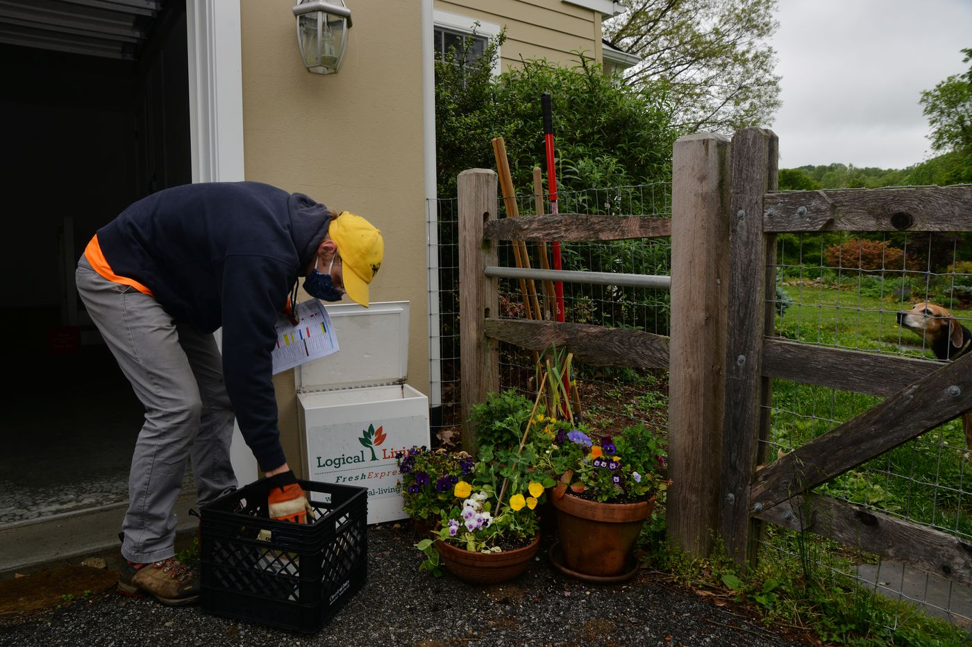 Coronavirus has sparked a comeback for old-fashioned milk delivery in the Philly suburbs