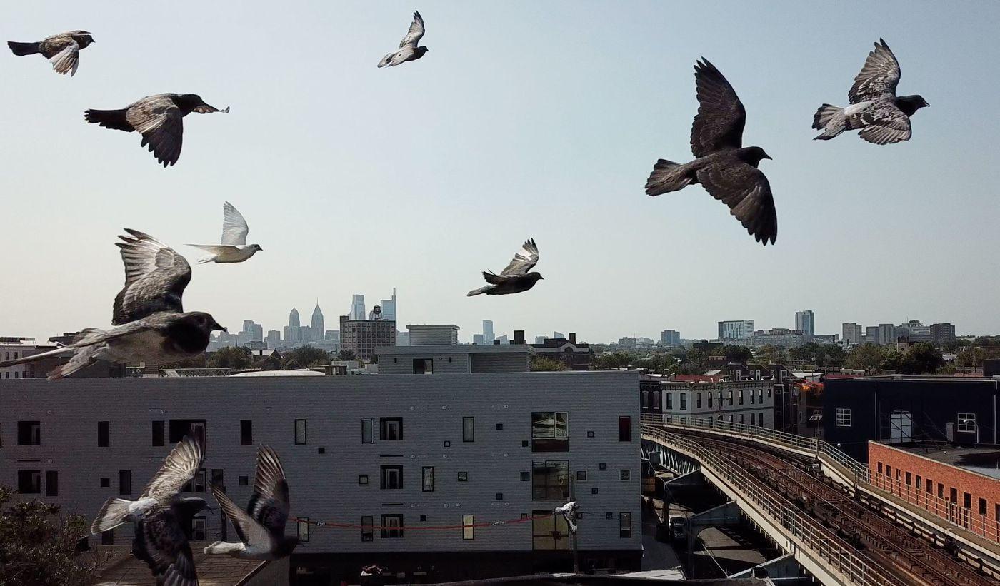 A flock of pigeons passes a drone near Kensington Avenue, in the Kensington section of Philadelphia.