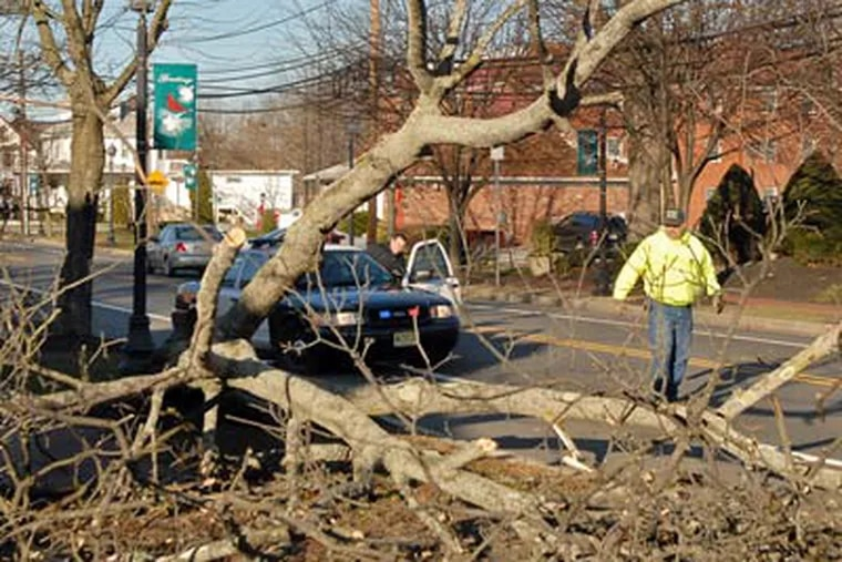 Les King, right, a worker with the Burlington County Highway Dept., and Evesham Township police Officer Michael DeGregorio, left, inspect a large tree in Marlton which toppled in the high winds earlier today. (Tom Gralish / Staff Photographer)