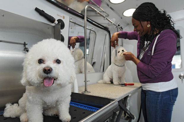 Looking for the best pet groomers in the Philadelphia region? Here's a search tool for that