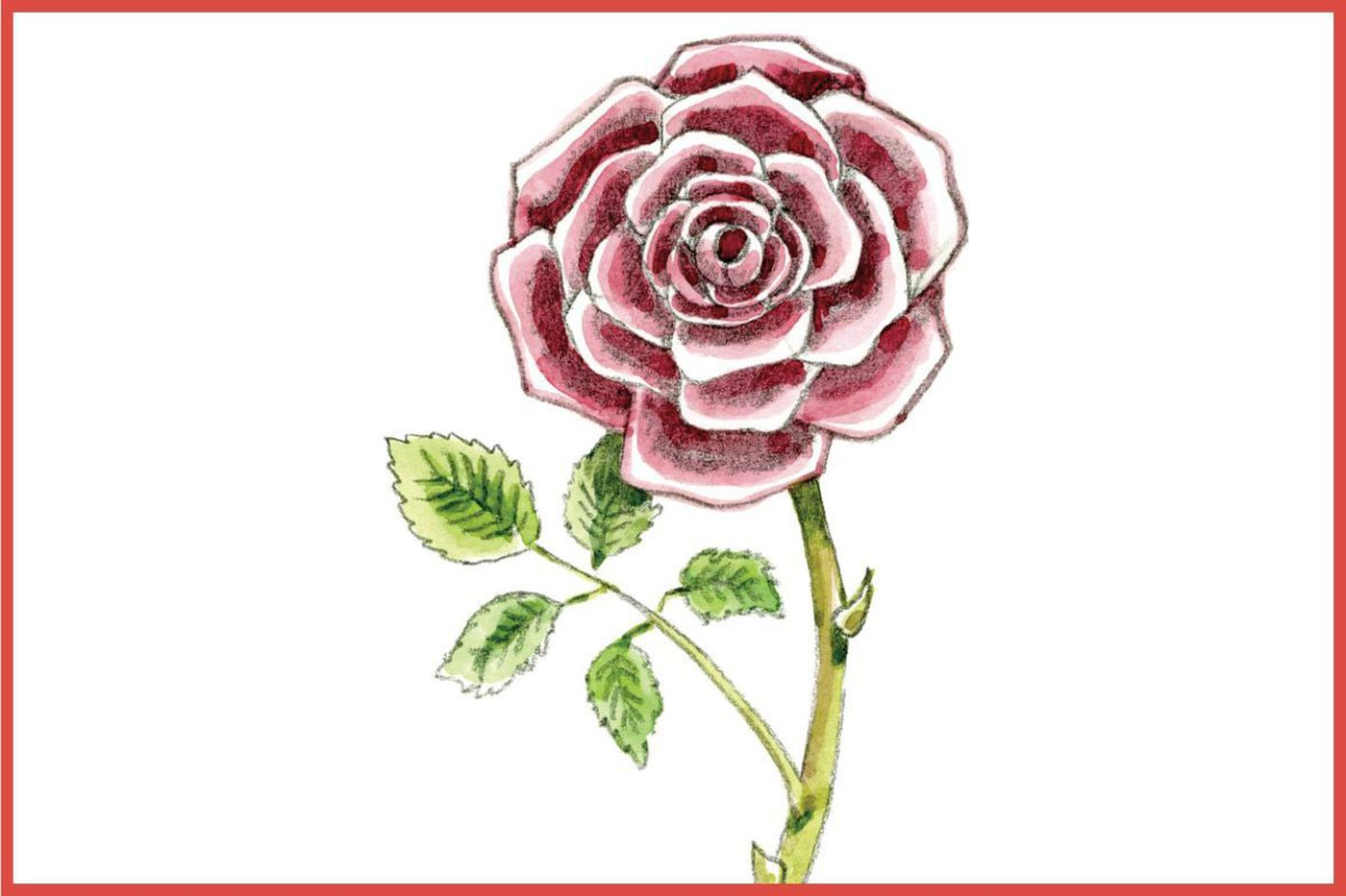 Hey Kids Draw This Beautiful Rose For A Chance To See Your Artwork