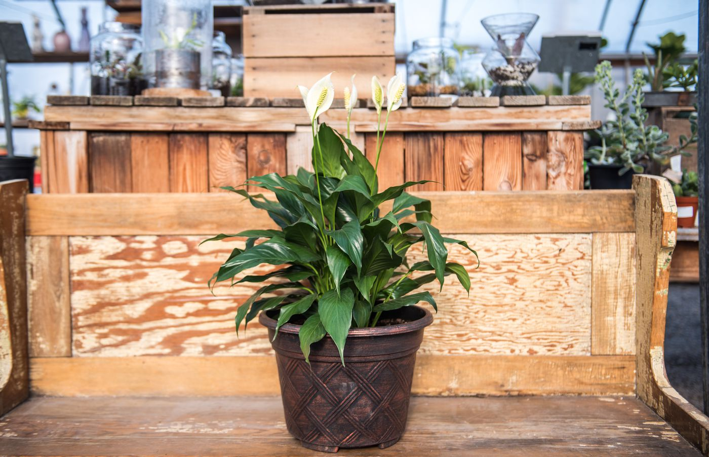 The 10 air-purifying indoor plants that are easiest to keep ... Names Common Houseplants Identification on tropical house plant identification, flowering plant identification, succulent plant identification, indoor ivy plant identification,