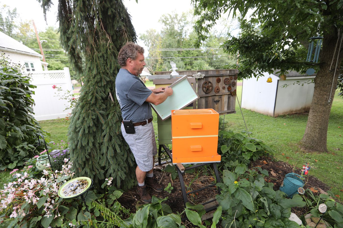 Hatfield passes embattled beekeeping ordinance