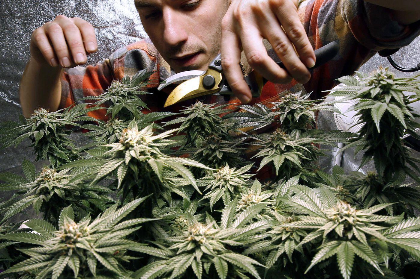 Large majority favors New Jersey marijuana legalization, according to poll