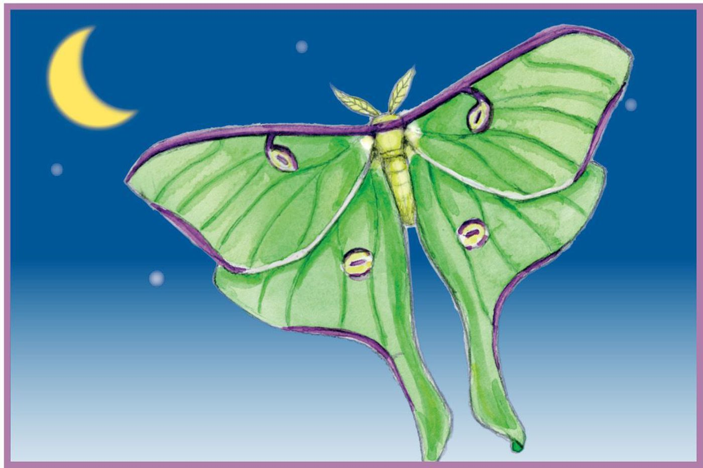 Hey, kids: Draw this fancy moth for a chance to have your artwork published!