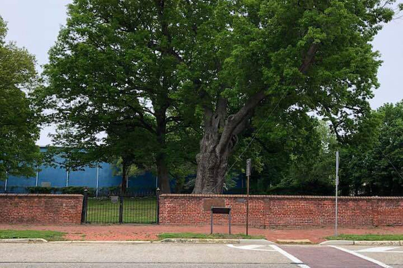 Salem mourns centuries-old oak tree, will hold weekend memorial service