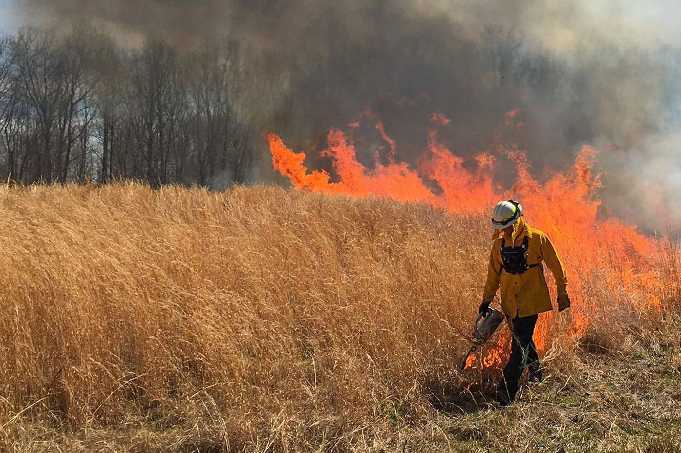 You can watch as Valley Forge burns 150 acres of meadow