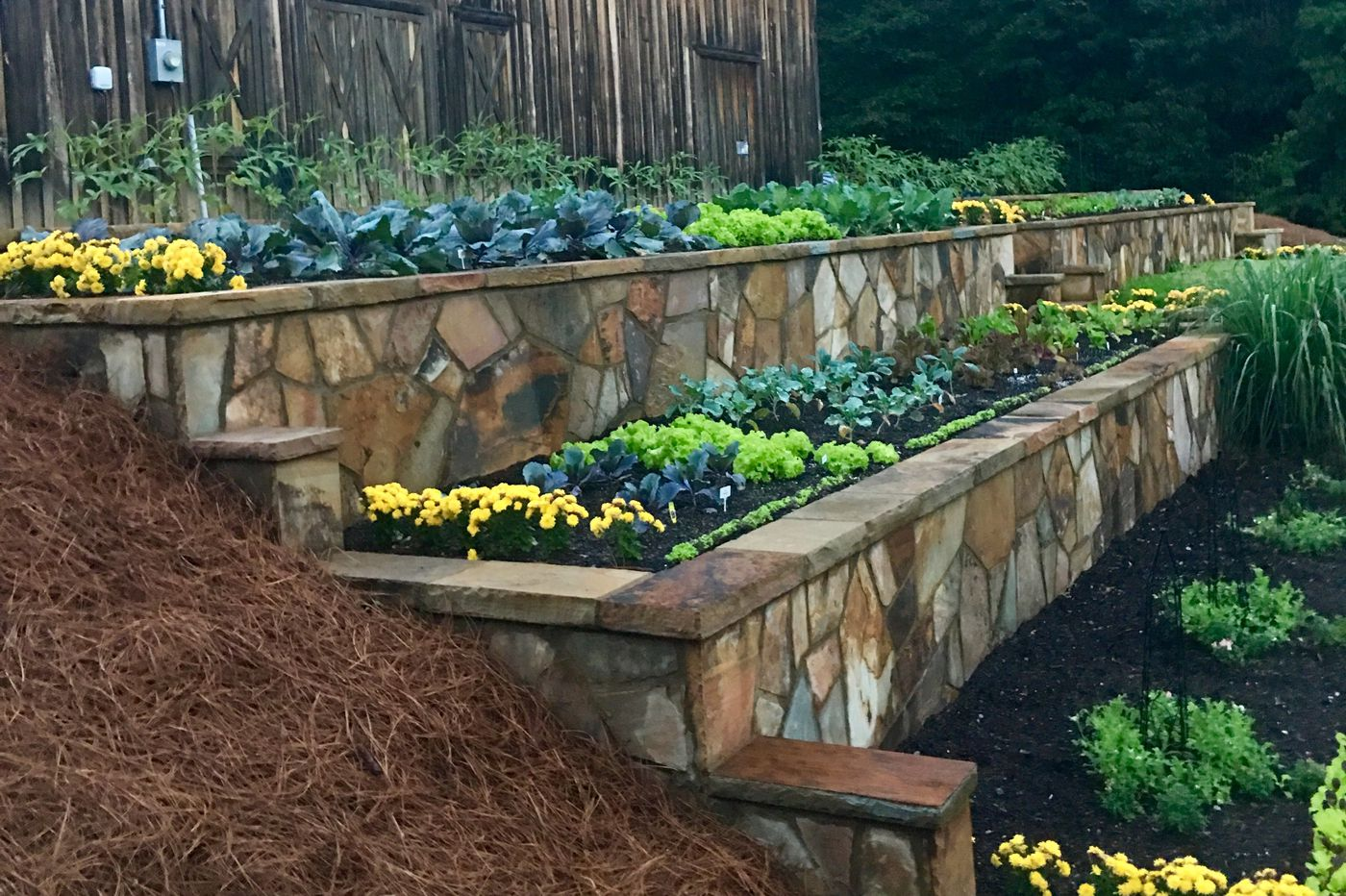 Garden Basics What Is An Annual What Is A Perennial And Why