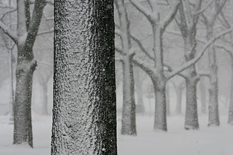 Remember this? Here's what a big snowstorm looked like last winter on trees near the Philadelphia Museum of Art. A winter storm is predicted for the region today through Monday. (Michael S. Wirtz/File)