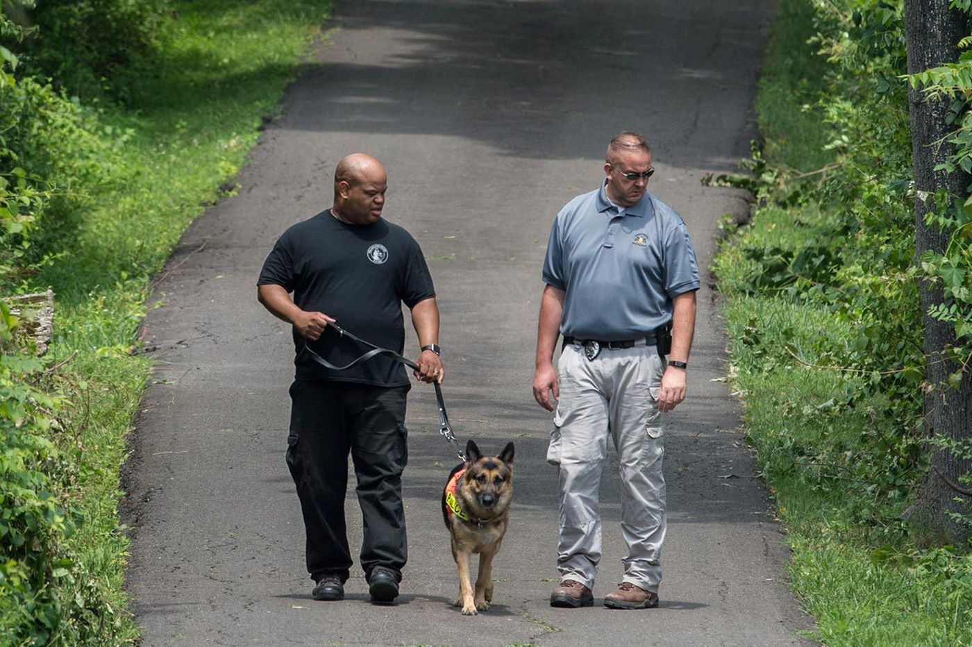 How did cadaver dogs detect Bucks County bodies 12 feet underground?
