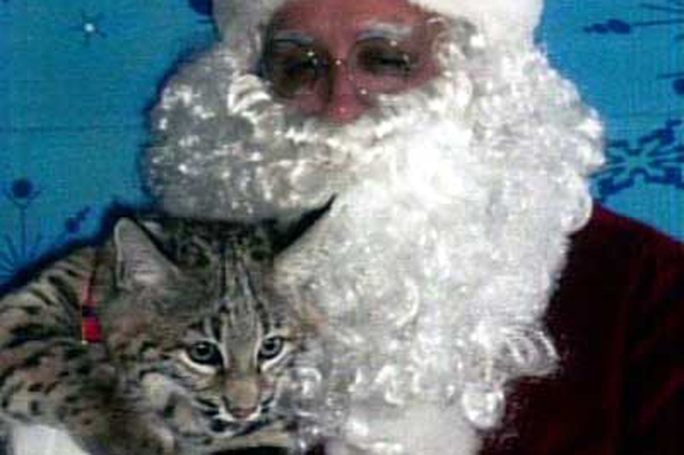 Ho-ho-whew: Bite came from domesticated kitty