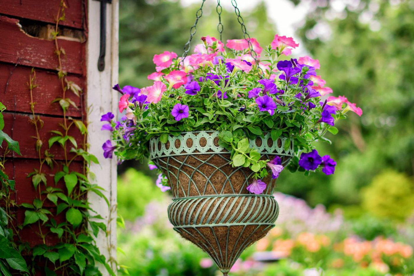 July 28-Aug. 3: In the garden, it's time to…